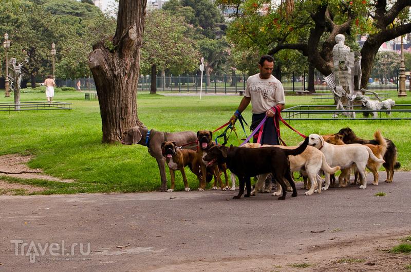 Буэнос-Айрес, Эль-Калафате, Серро Торре / Аргентина
