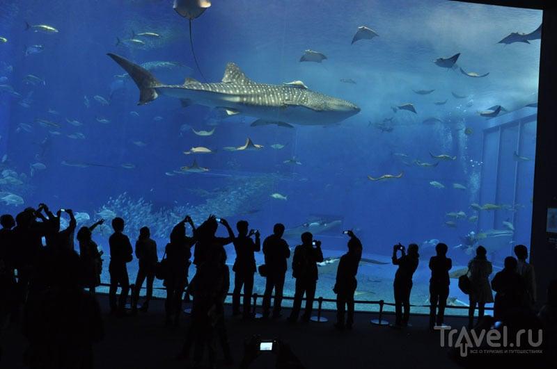 Аквариум с акулами на Окинаве
