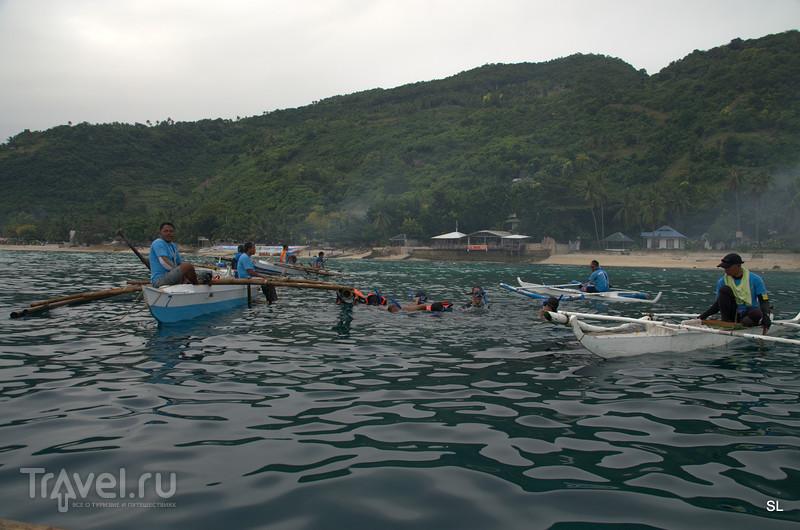 Китовые акулы / Филиппины