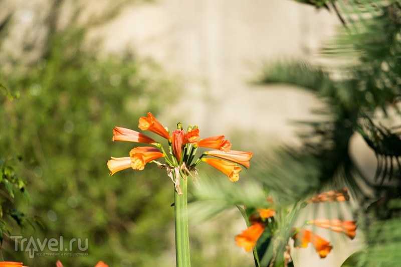 Ранняя весна в Бруклинском ботаническом саду / США