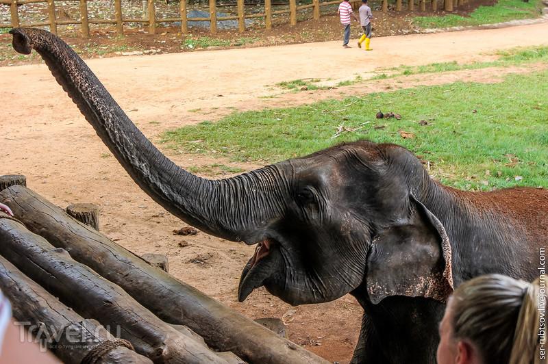 На Шри-Ланке и для слонов строят приюты / Шри-Ланка