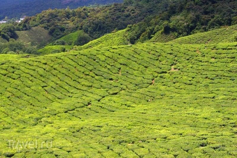 Швейцария в Азии. Кемерон-Хайленд / Малайзия