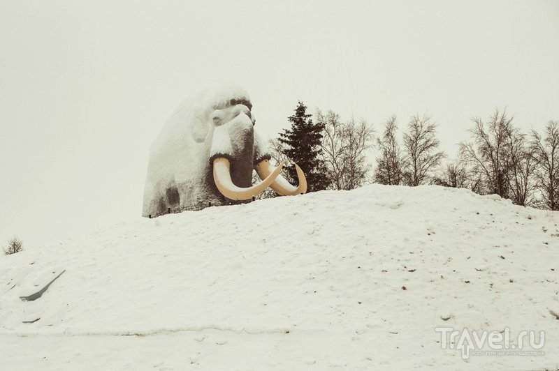 Салехард-город, где можно продать бивни мамонта / Россия