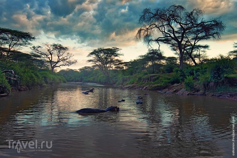 Африканское фотопутешествие №1 / Фото из Кении