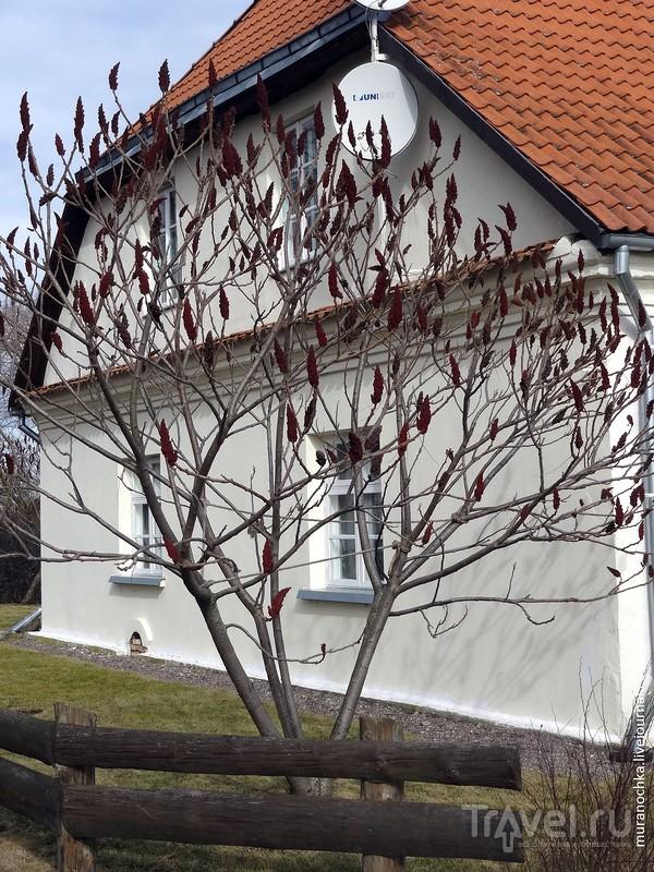 """""""Белый дом"""" на территории Рундальского дворца в Латвии - и такое бывает! / Латвия"""