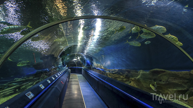 Ленинградский океанариум