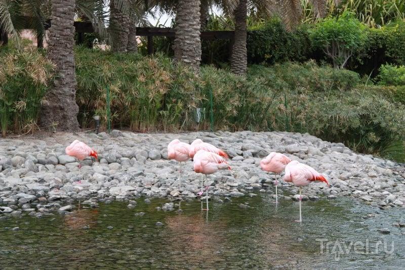 Фламинго у отеля Ritz Carlton