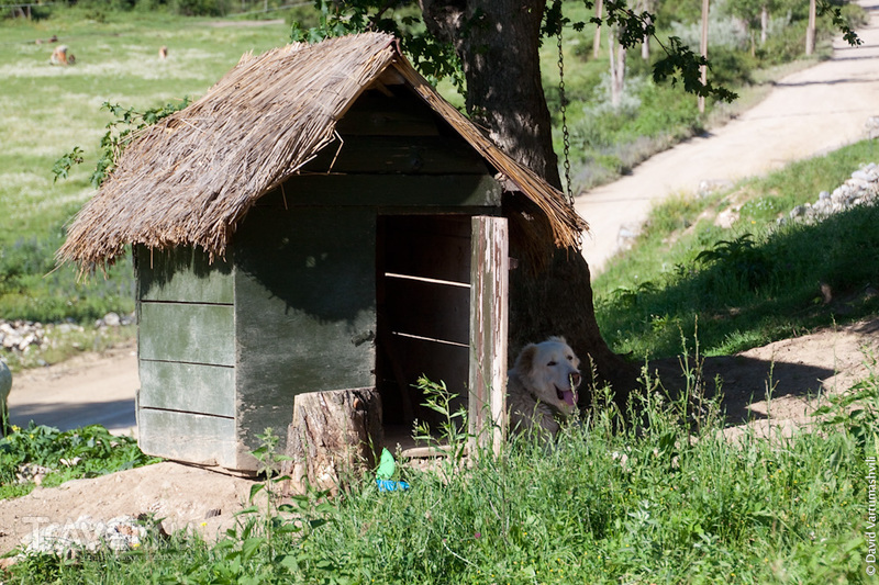 Грузия. Козифа, глухой край долины монастырей / Фото из Грузии
