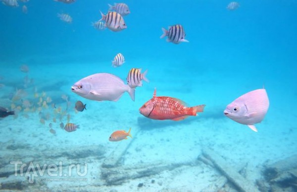 Путешествия по Мексике - Подводный Мир / Мексика