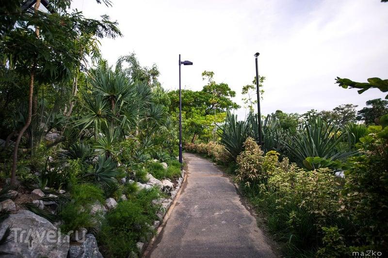 Сингапурские сады / Фото из Сингапура