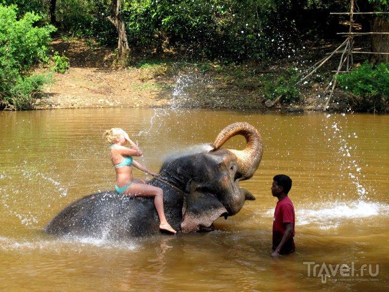 Купание со слонами. Гоа, Индия / Индия