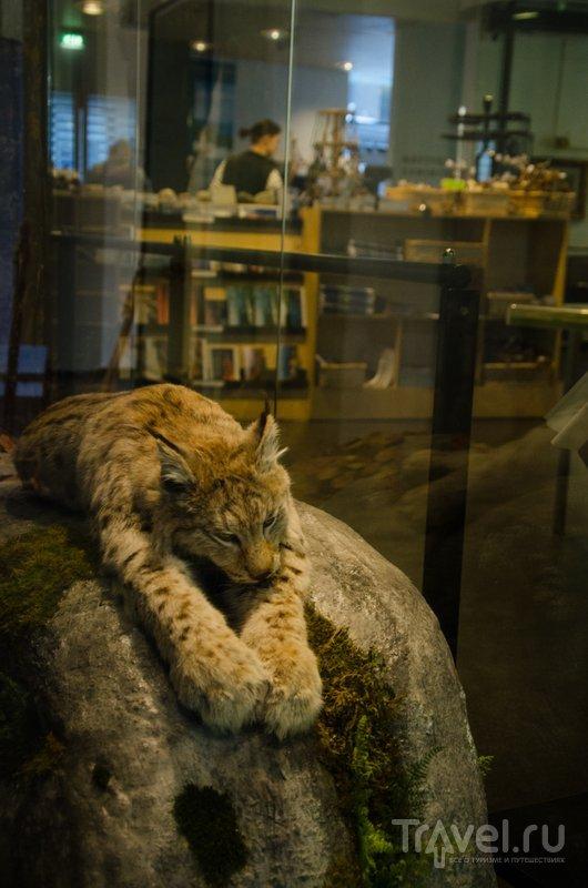 Как будто уснул / Фото из Финляндии