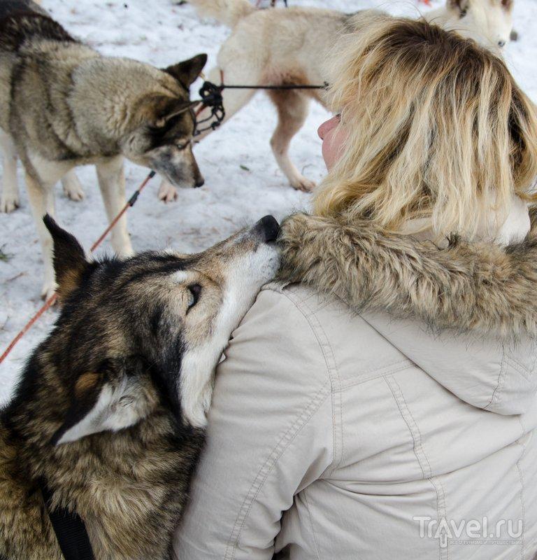 Это очень дружелюбные псы / Фото из Финляндии