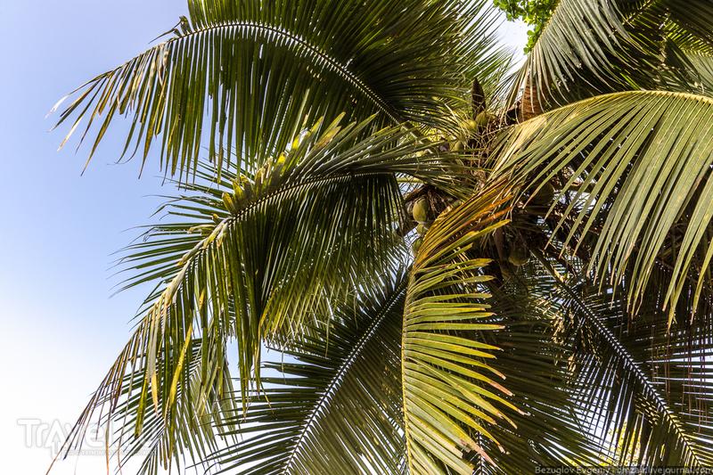 Шри-Ланка. 2015. По дороге к Пиннавела / Фото со Шри-Ланки