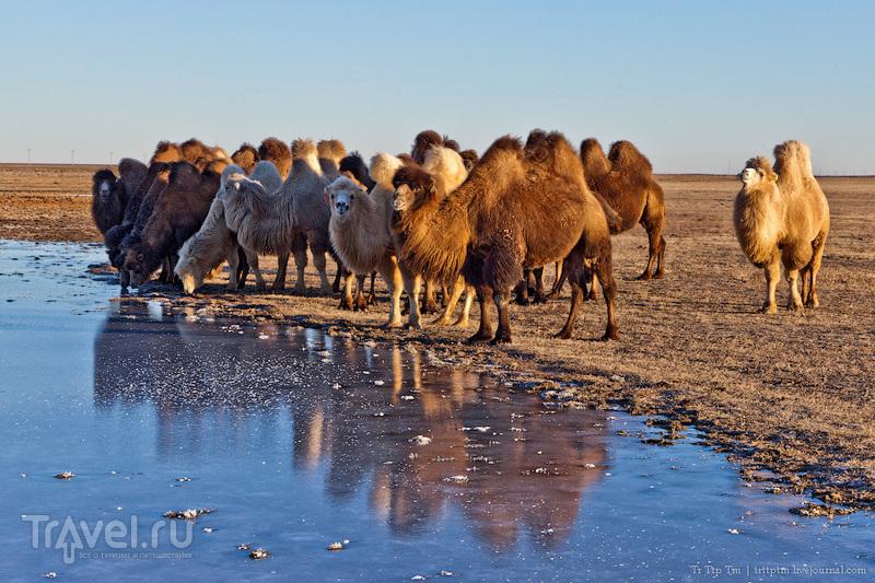 Пустыни юго-западного Казахстана / Фото из Казахстана