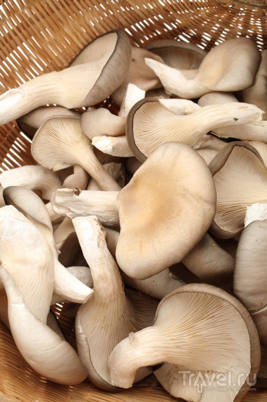 Устричные грибы из Wallace Shelter