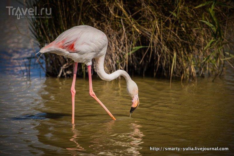 Орнитологический парк Пон-де-Го / Фото из Франции