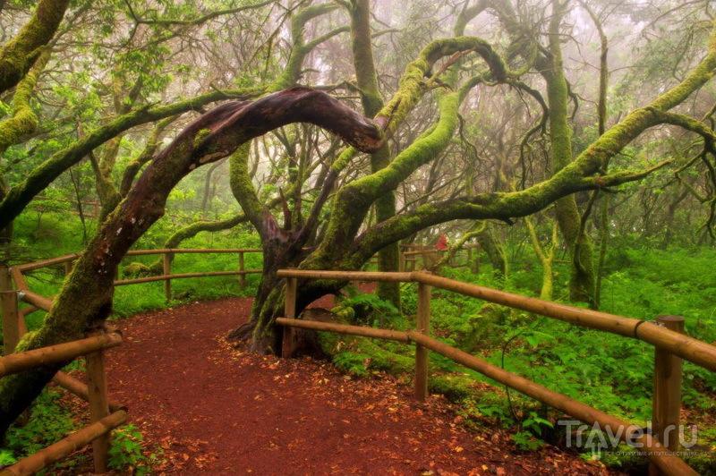 Заповедные леса Лансароте