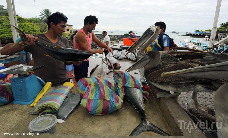 Рыбный рынок в Пуэрто-Айора. Галапагосы / Эквадор