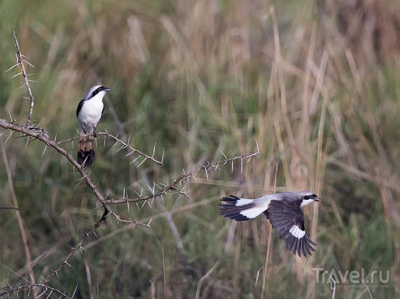 Руанда. Национальный парк Акагера / Фото из Руанды