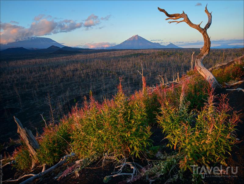 Путешествие по Камчатке: природный парк Ключевской / Фото из России
