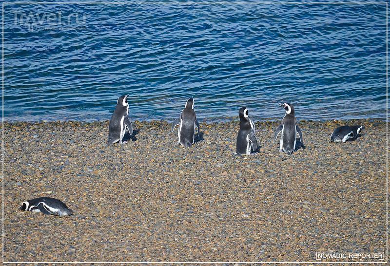 Валдес. Полцарства за пингвина! / Фото из Аргентины