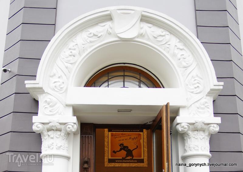 Кошачий музей / Россия