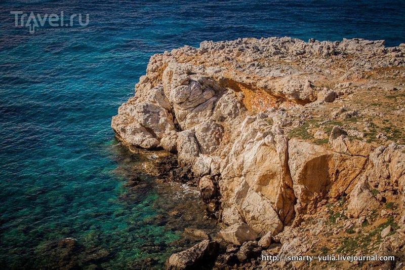 Дикие ослы Карпасии / Фото с Кипра