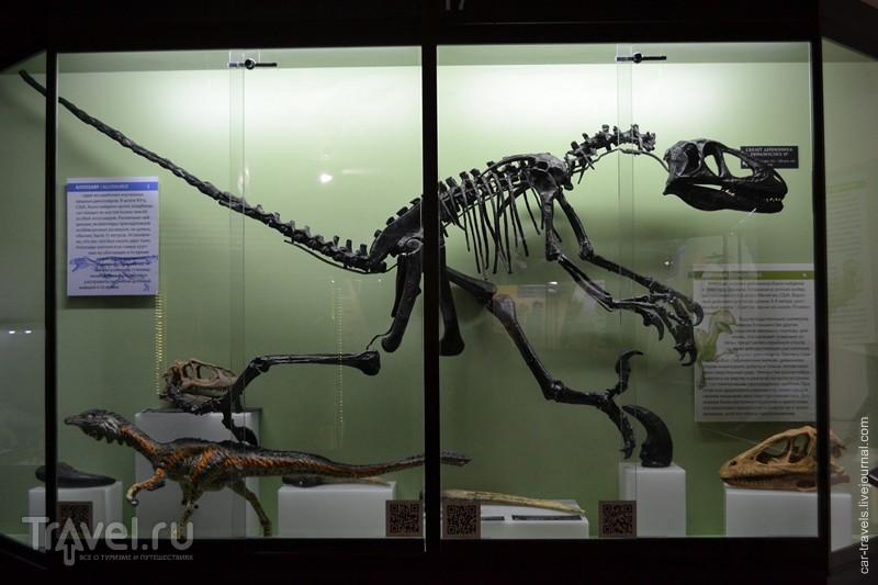 Киров и динозавры / Россия