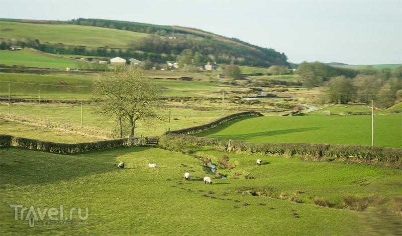 Шотландия из окна поезда / Фото из Великобритании