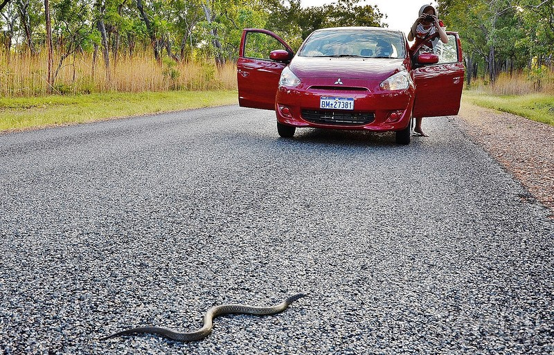 Дыхание дикой Австралии. Национальный парк Какаду / Фото из Австралии