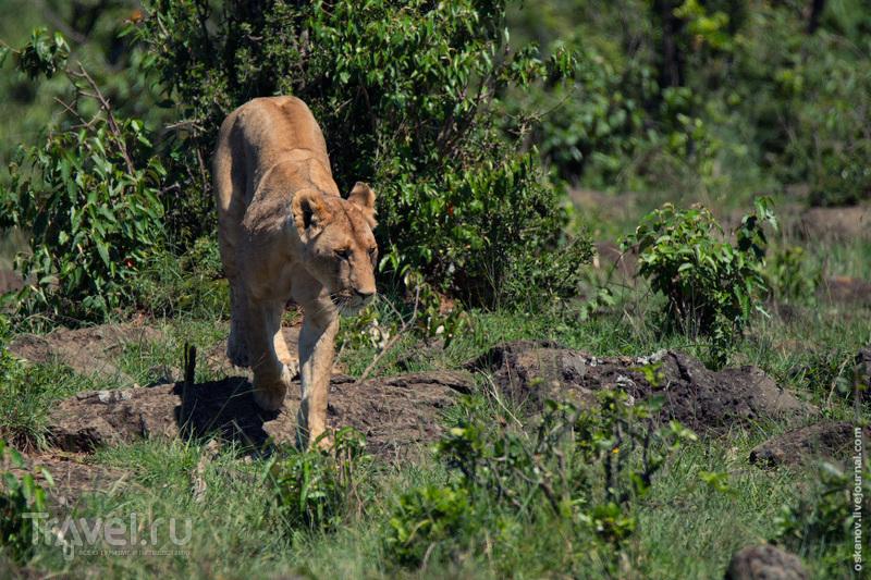Большое африканское путешествие пятничного формата / Фото из Танзании