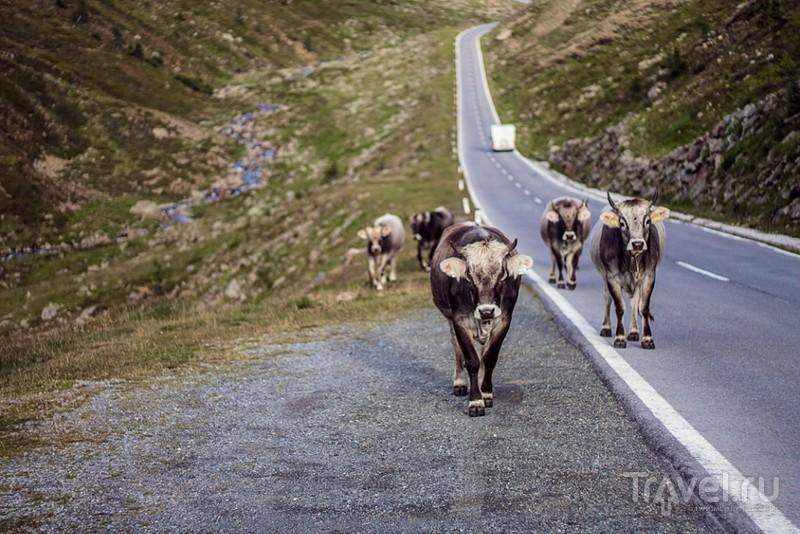 """Timmelsjoch или Passo Rombo или """"Секретная трасса"""" / Австрия"""