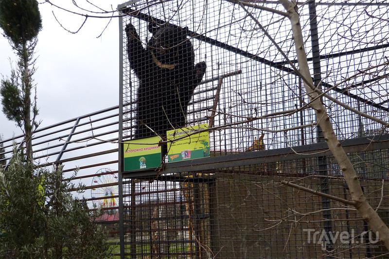 Ялтинский зоопарк / Россия