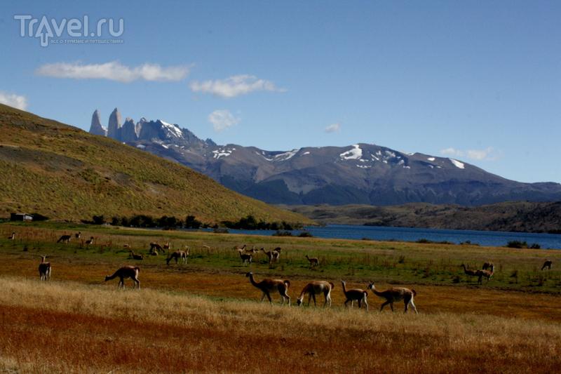 Чили - сбыча мечт! Патагония. Парк Торрес дель Пайне. Лагуна Асул, водопад Пайне и дорога в Аргентину / Фото из Чили