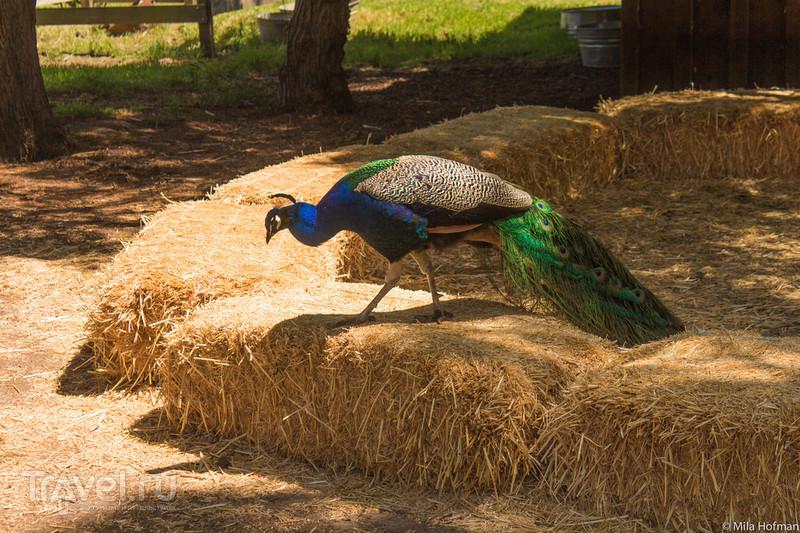 Историческая ферма Andenwood / Фото из США
