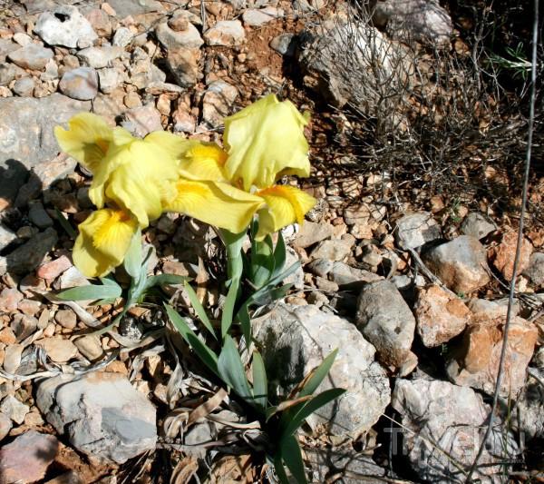 Весна в Провансе - гора Sainte Victoire / Франция