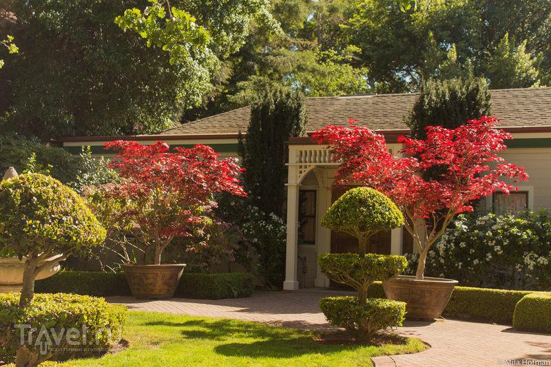 Парк CuriOdyssey в Сан Матео / Фото из США