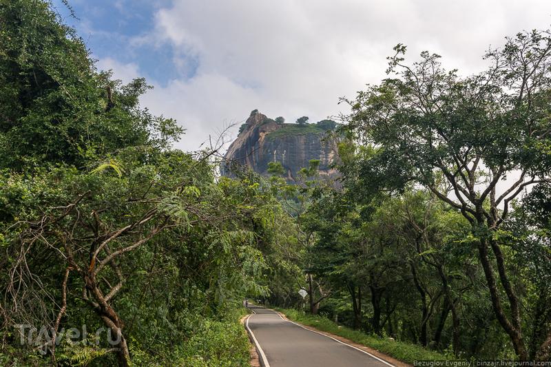 Шри-Ланка 2015. Вокруг Львиной скалы / Фото со Шри-Ланки
