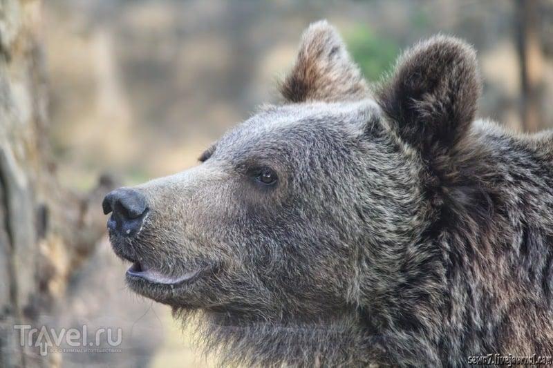 Хищники вроцлавского зоопарка / Польша