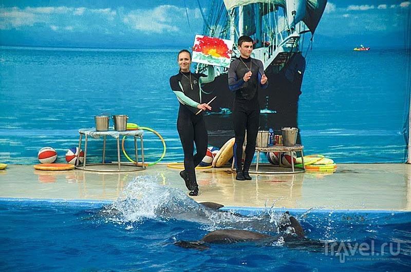 Дельфины в анапском дельфинарии даже рисуют