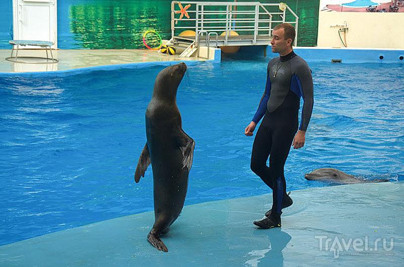 Морской лев с тренером