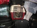 Животным транспортировка в багаже дается очень тяжело