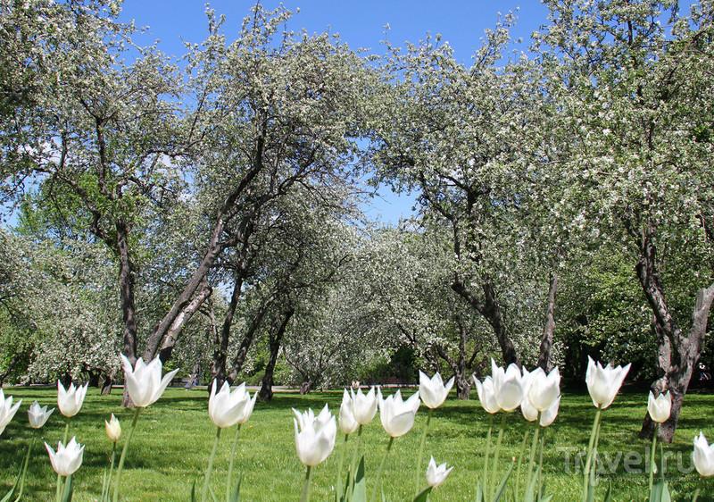 Весна в Коломенском / Фото из России