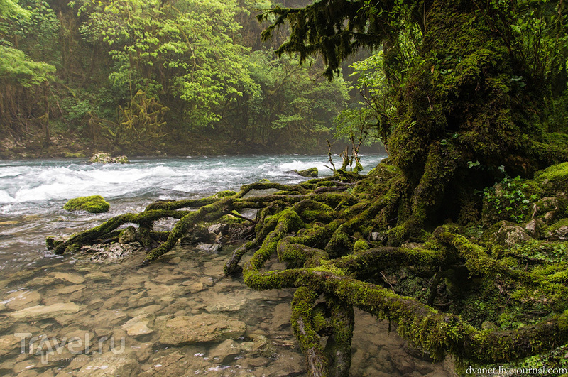 Абхазия. О форели и монахах-аскетах / Фото из Абхазии
