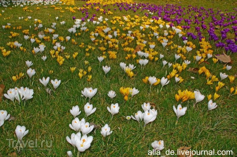 Остров цветов Mainau. Март / Германия