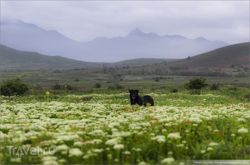 Душа Коктебеля. Прогулка в компании черной собаки / Фото из России