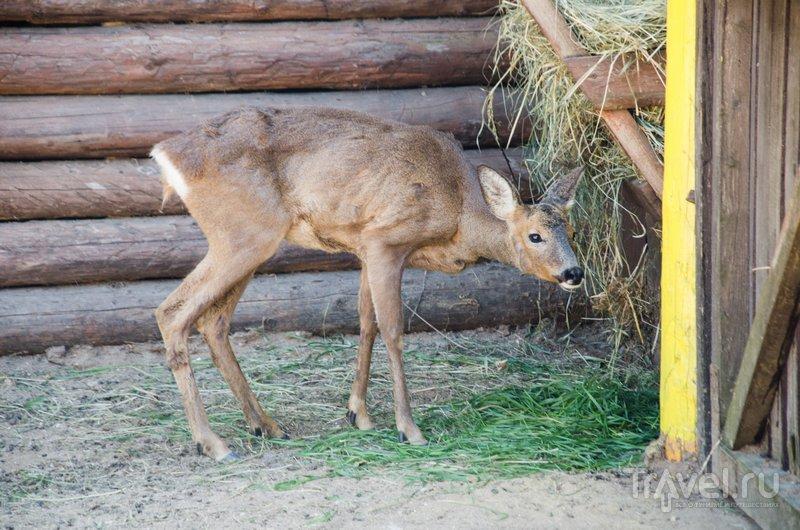 Один из обитателей местного зоопарка