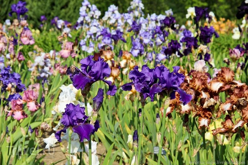 Ботанический сад Праги / Чехия