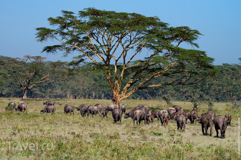 Новый год по-африкански / Фото из Кении